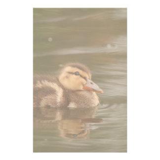 Ducks Birds Animals Wildlife Photography Customized Stationery