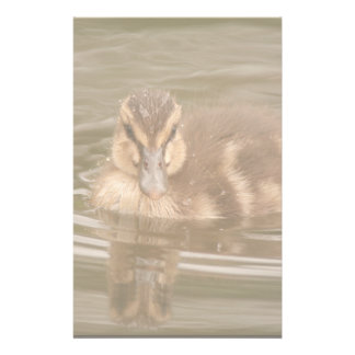 Ducks Birds Animals Wildlife Photography Personalized Stationery