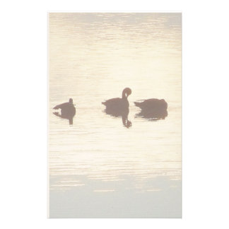 Ducks Birds Animals Wildlife Photography Stationery Paper