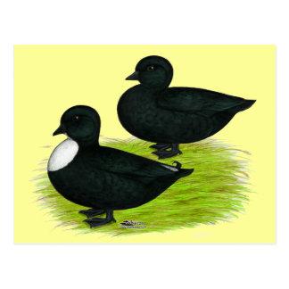 Ducks:  Black Calls Postcard