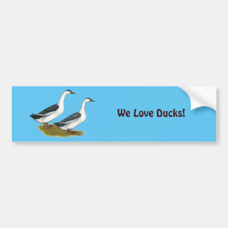 Ducks:  Blue Magpies Bumper Sticker