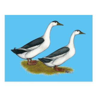 Ducks:  Blue Magpies Postcard