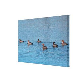 Ducks By Six Canvas Print
