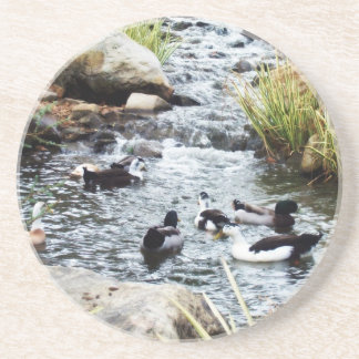 Ducks Coasters