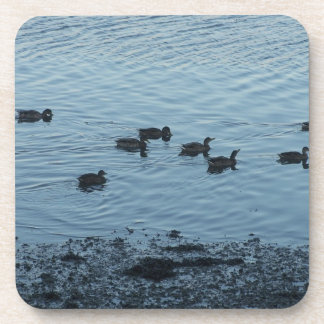 Ducks. Coasters