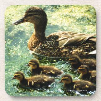 ducks drink coaster