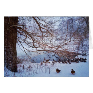 Ducks Gather Around A Frozen Pond Card