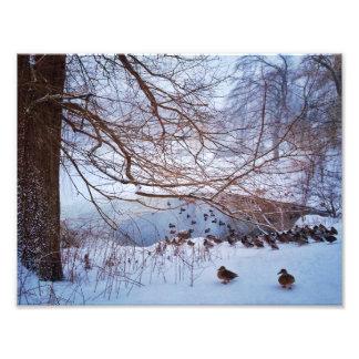 Ducks Gather Around A Frozen Pond Photo Print