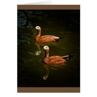Ducks in a row card