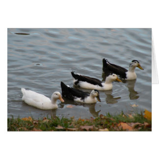Ducks in a Row greeting card