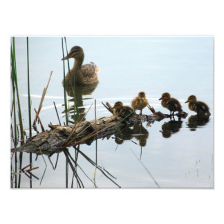 Ducks in a Row Photo Print