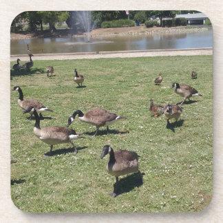 Ducks In Nature Drink Coaster