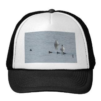 Ducks in water trucker hats