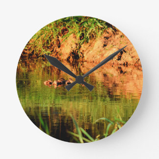 DUCKS IN WATER QUEENSLAND AUSTRALIA ROUND CLOCK