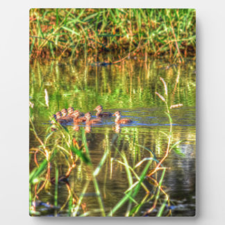 DUCKS IN WTAER AUSTRALIA ART EFFECTS PLAQUE