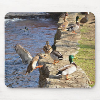 Ducks Mouse Pad