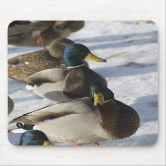 Ducks Mousepads