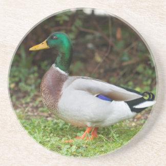 ducks on lake beverage coasters