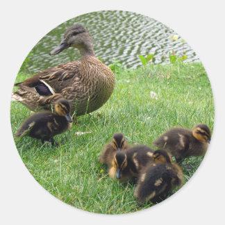 Ducks Round Sticker