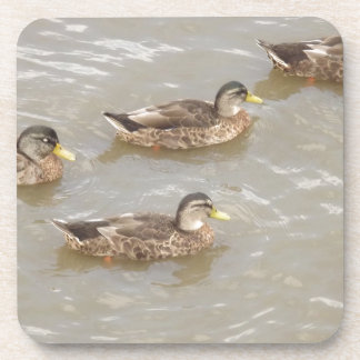 Ducks swimming drink coaster