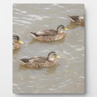 Ducks swimming plaque