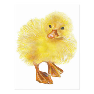 ducky , baby chick postcard