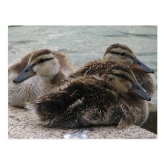 Ducky Day Postcard
