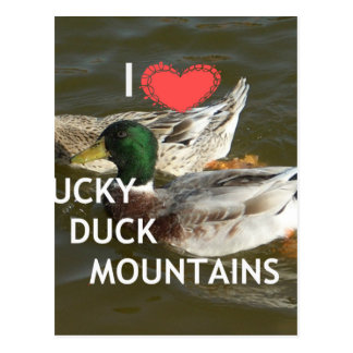 Ducky duck mountains. postcard