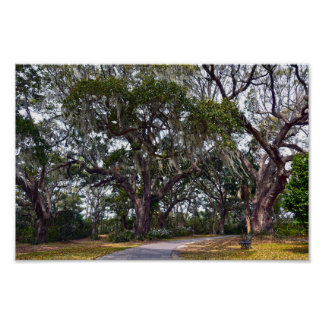 Dueling Cannon Oaks, Charles Town Landing, S.C. Poster