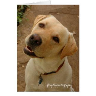 duke, glorydaysphotography card