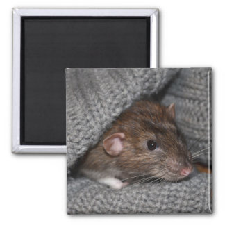 Dumbo Rat Magnet