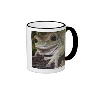 Dumpy Tree Frog. Smiling Frog. Litoria caerulea. Mugs