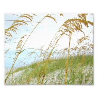 Dune Grass White Sand Beach Photograph