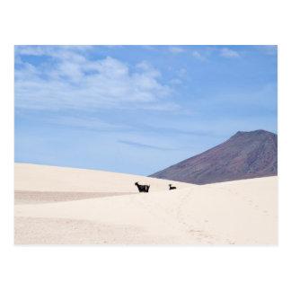 Dunes of Corralejo, Fuerteventura, Canary islands, Postcard