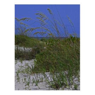 Dunes Postcard