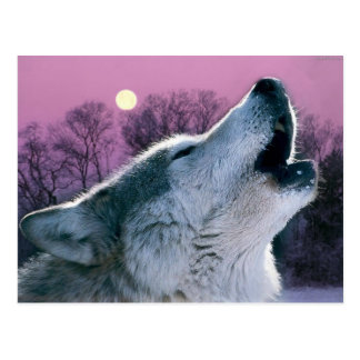 dusk woodland forest moonlight howling wolf postcard