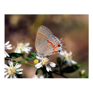 Dusky Blue Hairstreak Butterfly Postcard