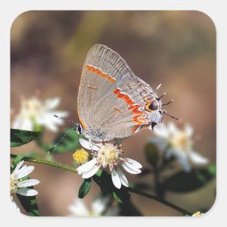 Dusky Blue Hairstreak Butterfly Sticker