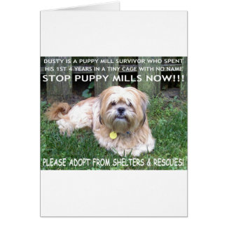 DUSTY - PUPPY MILL SURVIVOR GREETING CARDS