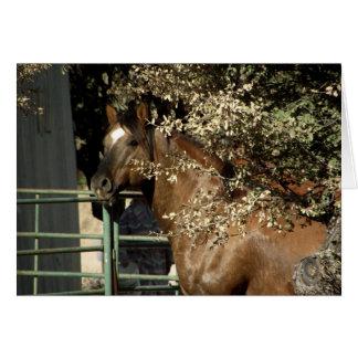 Dusty, Quarter Horse Stallion Card