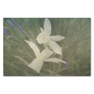 Dusty Vintage Daffodil Thalia Photo Tissue Paper