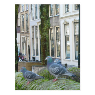Dutch Canal Houses and Pigeons Postcard