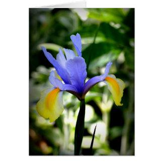 Dutch Iris Card