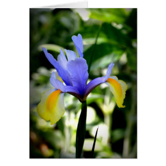 Dutch Iris Note Card