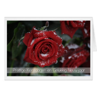 dutch Merry Christmas-Happy New Year snowy red ros Greeting Card