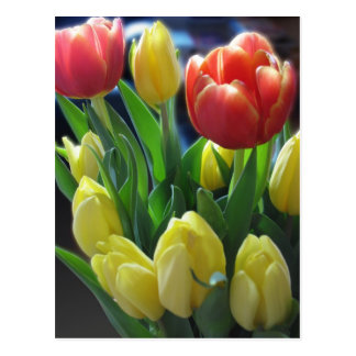 Dutch Tulips Postcard