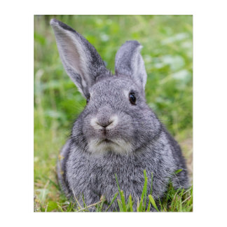 Dwarf bunny rabbit acrylic wall art