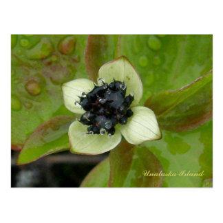 Dwarf Dogwood Blossom, Unalaska Island Postcard