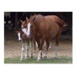DX- Beautiful Horses Postcard