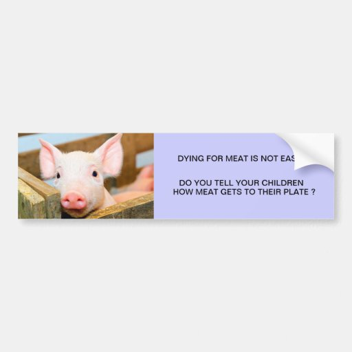 DYING FOR MEAT IS NOT EASY BUMPER STICKERS